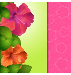 Hibiscus flower panel border vector image