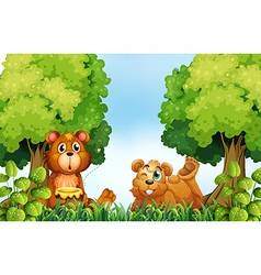 Bears and forest vector image