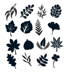 Black Leaf Symbols vector image