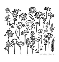 graphic collection wild meadow flowers isolated vector image