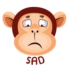 monkey is sad on white background vector image