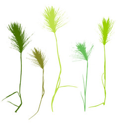 set of herbs silhouettes vector image