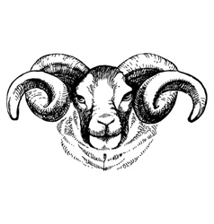 Hand drawn sketch portrait of sheep vector image