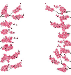 branches with a pink cherry buds sakura from vector image