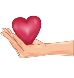 Hand holding a red heart isolated over white vector image