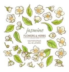 jasmine flowers set vector image