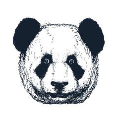 hand drawn panda vector image