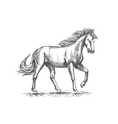 Horse in paddock isolated sketch for equine design vector image