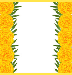 Marigold flower - tagetes border vector
