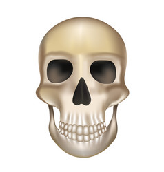 old human skull vector image