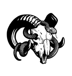 ram skull with a curly snake vector image