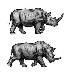 african rhino walking sketch of rhinoceros animal vector image