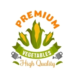 Corn vegetable sign with fresh maize cobs vector image