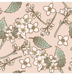 Jasmine flowers seamless background vector image