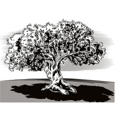 old olive tree and tortuous vector image