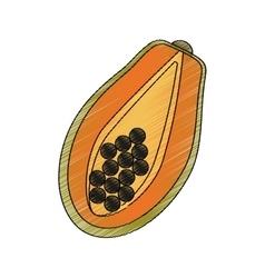 paw paw fruit icon vector image