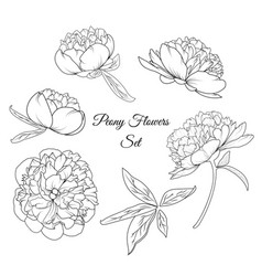 Peony rose flowers reusable elements template set vector