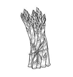 Asparagus collection vector