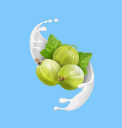 Ripe berry green gooseberry in milk splash vector