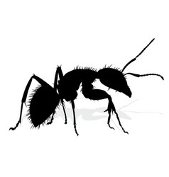 Silhouette of ant vector