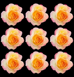 Set of realistic light pink mix yellow rose vector image