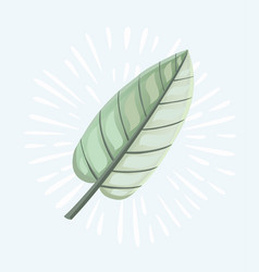 green willow leaves vector image