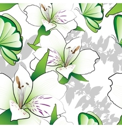 Lilies on a white background vector image