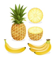 Pineapple and banana fruit vector