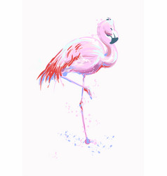 pink flamingo exotic bird vector image