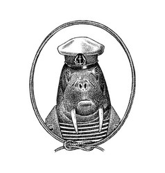 sailor walrus character or mariner sea cow hand vector image