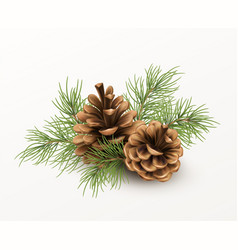 pine cone with a branch spruce needles isolated vector image