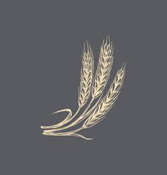 wheat ear in drawn rye spike vector image