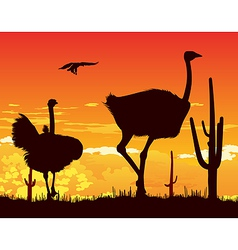 Wild ostriches among the cacti vector image vector image