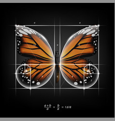 Golden section ratio divine proportion butterfly vector