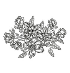 hand drawn flowers vintage floral composition vector image