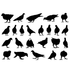 Set of different doves vector image