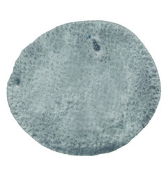 Abstract dark grey brush stroke circle shape vector