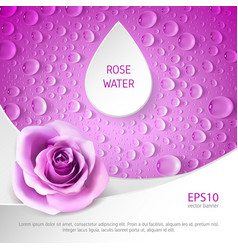 Banner for rose watter vector
