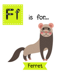 Letter f tracing standing ferret vector