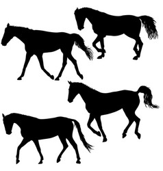 Set silhouette of black mustang horse vector