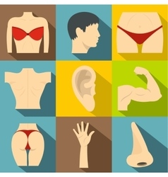 Outer part of body icons set flat style vector image