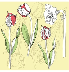 Background with tulip and amaryllis vector