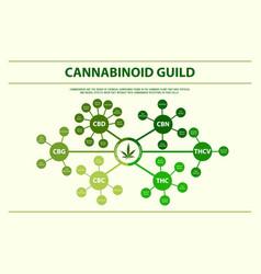 cannabinoid guide horizontal infographic vector image