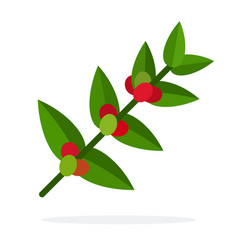 Coffee branch with leaves and berries flat vector