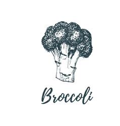 hand drawn broccoli of vector image