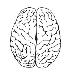 brain a top view vector image