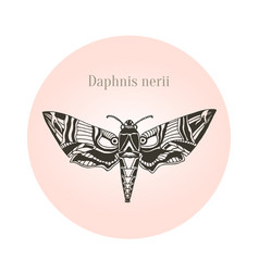 Oleander hawk moth tattoo art daphnis nerii vector