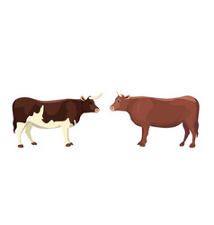 cartoon bull mammal animal isolated vector image vector image