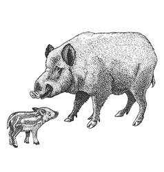 engraving boar vector image vector image