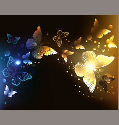 contrasting night butterflies vector image